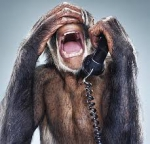 Téléphone singe.jpg