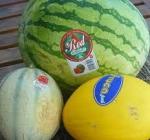 Melon et pastèque.jpg