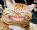 Chat souriant.jpg