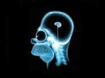 Cerveau fun.jpg